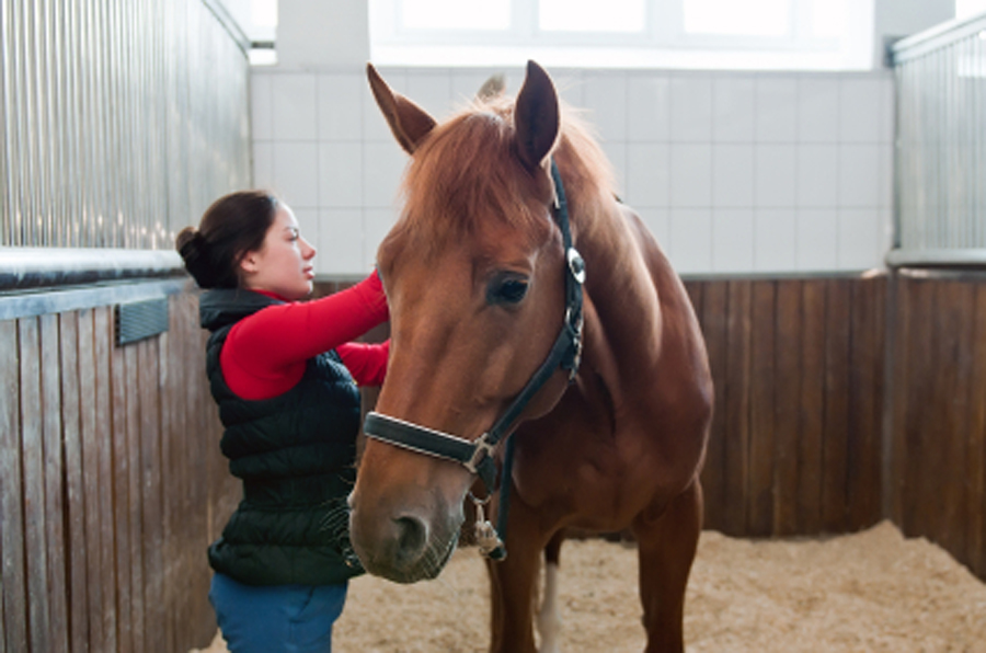 Horse Bedding Additives