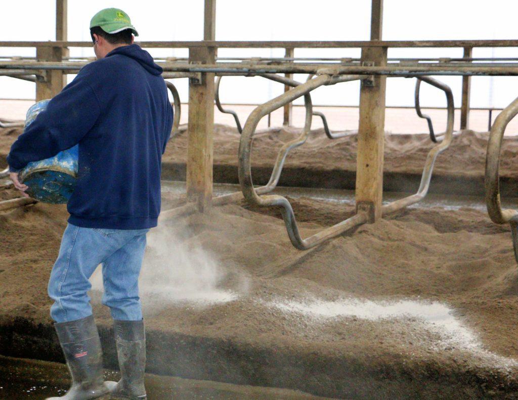 Dairy farmer adding Gypsum to soil